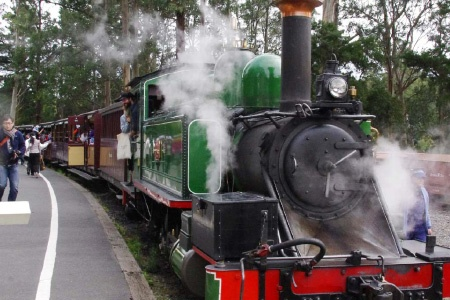 Puffing Billy with Wildlife and Lunch - Melbourne CBD