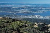 Mount Wellington Morning Tour -