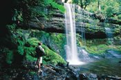 Mount Field, Russell Falls Full Day Tour -