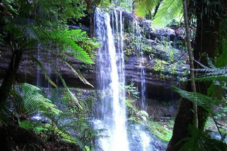 Mount Field and Russell Falls Full Day Tour -
