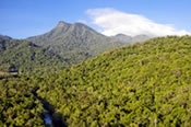 30 Minute Rainforest Scenic Helicopter Flight -