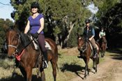 90 Minute Bush Trail Ride -