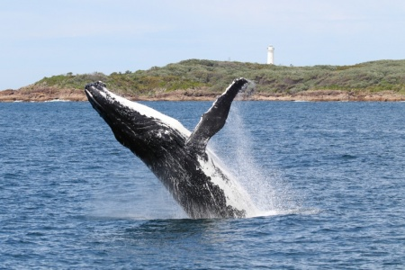Whale Watch Cruise With Beach and Dune 4WD Tour Combo