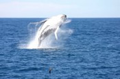 Whale Watch and Sandboarding 4WD Tour Combo -