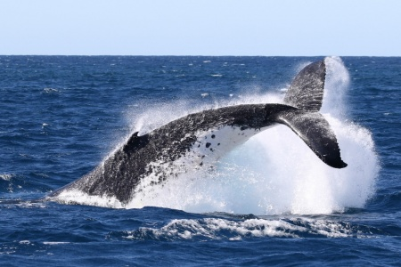Whale Watch and Sandboarding 4WD Tour Combo
