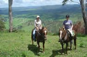 2 Hour Private Beach Horse Riding in Noosa -