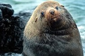 Seal Watching Eco Cruise -