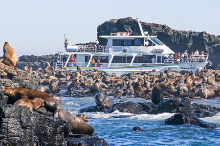 Seal Watching Eco Cruise - Jet Boating