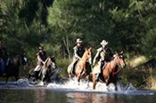 Horse Riding in the Blue Mountains with Private Picnic -