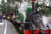 Puffing Billy with Wildlife and Lunch