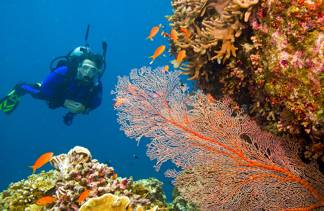 Water - Scuba Diving & Snorkelling
