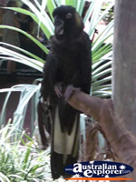 Bird Breakfast Black Cockatoo . . . CLICK TO ENLARGE