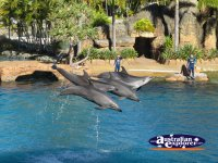 Dolphins Performing at Seaworld . . . CLICK TO ENLARGE