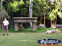 Dreamworld Tiger Instructor Presentation . . . CLICK TO ENLARGE
