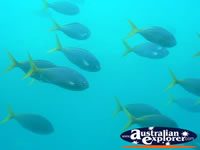 Fish in the Great Barrier Reef . . . CLICK TO ENLARGE