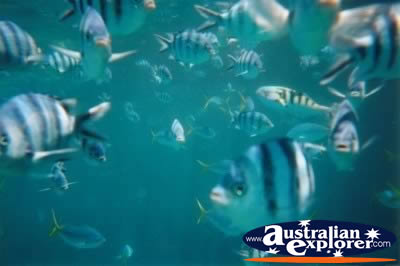 Great Barrier Reef Pretty Fish . . . VIEW ALL PARROT FISH PHOTOGRAPHS