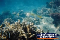 Whitsundays Fish And Coral . . . CLICK TO ENLARGE