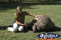 Giant Galapagos Land Tortoise Being Fed . . . CLICK TO ENLARGE