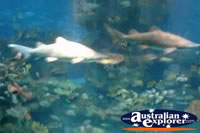 Small Sharks in Water . . . CLICK TO ENLARGE