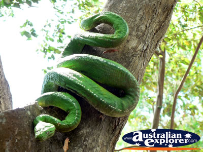 4wd Car Rental >> LARGE SNAKE IN A TREE VIRTUAL POSTCARD, LARGE SNAKE IN A TREE ECARD, LARGE SNAKE IN A TREE ...