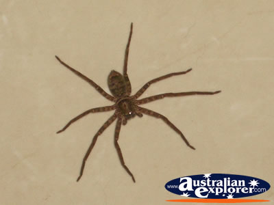 Close up of Spider . . . CLICK TO VIEW ALL SPIDERS POSTCARDS