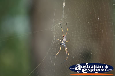 Garden Spider . . . CLICK TO VIEW ALL SPIDERS POSTCARDS