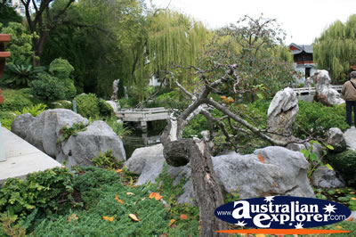 Rock Gardens . . . CLICK TO VIEW ALL CHINESE TREE POSTCARDS