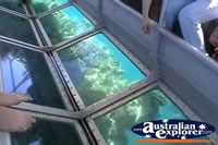 Plant Life Through Glass Bottom Boat . . . CLICK TO ENLARGE