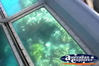Close Up of Plant Life Through Glass Bottom Boat . . . CLICK TO ENLARGE