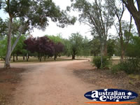 Leeton Oasis Caravan Park Road . . . CLICK TO ENLARGE