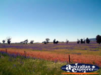 West Wyalong View . . . CLICK TO ENLARGE