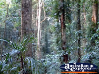 Dorrigo National Park - New South Wales . . . CLICK TO ENLARGE