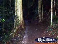 Dorrigo National Park in the Dark . . . CLICK TO ENLARGE