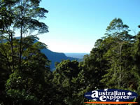 Dorrigo, View from Lookout . . . CLICK TO ENLARGE