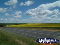 Road between Young and Boorowa . . . CLICK TO ENLARGE