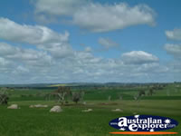 Vast and Beautiful Countryside Between Young and Boorowa . . . CLICK TO ENLARGE