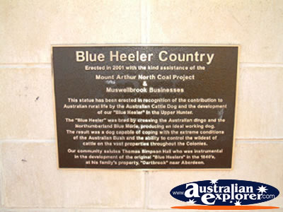 Muswellbrook Is Blue Heeler Country . . . CLICK TO VIEW ALL MUSWELLBROOK POSTCARDS