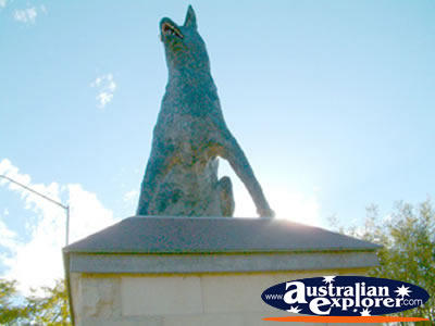 Statue of the Blue Heeler Muswellbrook . . . CLICK TO VIEW ALL MUSWELLBROOK POSTCARDS