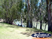 Balranald Caravan Park River Trees . . . CLICK TO ENLARGE