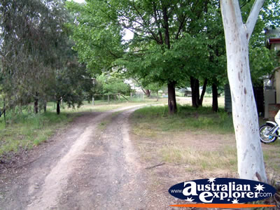 Tumut Go Cup School Driveway . . . CLICK TO VIEW ALL TUMUT POSTCARDS