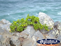 Cape Byron Rocks . . . CLICK TO ENLARGE
