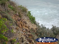Cape Byron Headland . . . CLICK TO ENLARGE