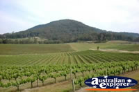 Hunter Valley Vineyards . . . CLICK TO ENLARGE