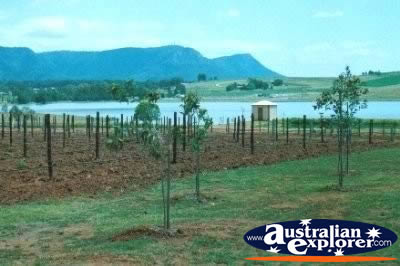 Hunter Valley Wineries . . . VIEW ALL HUNTER VALLEY PHOTOGRAPHS