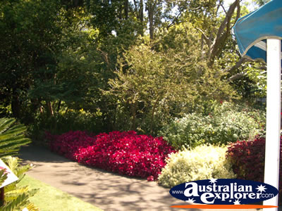 Botanical Gardens in Sydney . . . CLICK TO VIEW ALL SYDNEY (BOTANICAL GARDENS) POSTCARDS