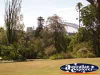 View of Sydney Botanical Gardens . . . CLICK TO ENLARGE