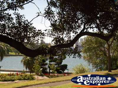 Sydney Botanical Gardens Near the Water . . . CLICK TO VIEW ALL SYDNEY (BOTANICAL GARDENS) POSTCARDS
