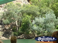 Katherine Gorge Bushes . . . CLICK TO ENLARGE