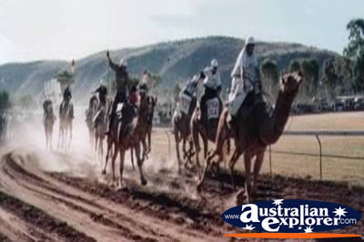 Camel Races . . . VIEW ALL MACDONNELL RANGES PHOTOGRAPHS