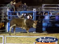 Rider Mounting Bull . . . CLICK TO ENLARGE